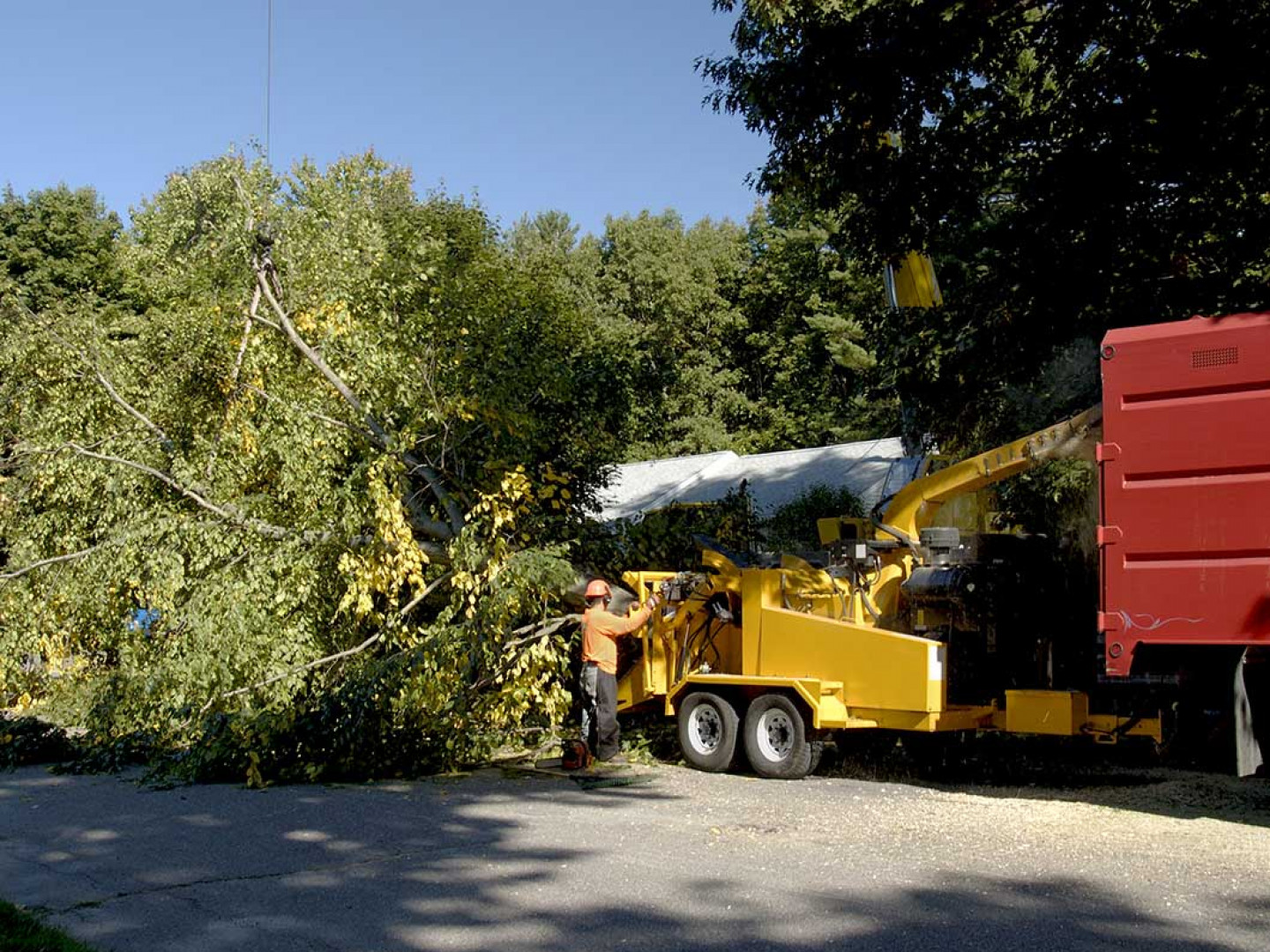 Get Rid of Dangerous or Unwanted Trees Safely